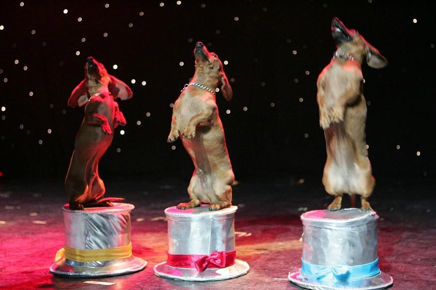 gregory popovichs comedy pet theater las vegas